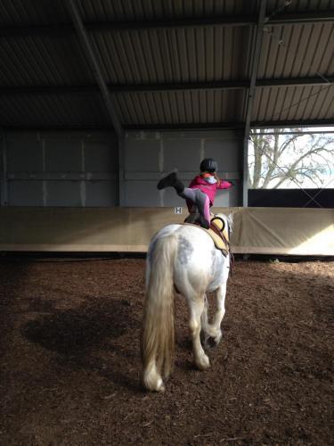 0544 Approche du cheval
